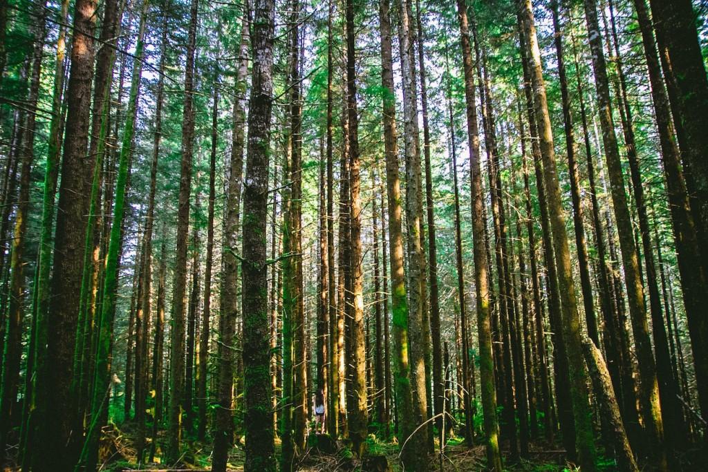 Blog - nature